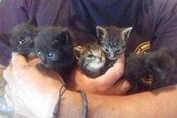 Lidská zrůda vyhodila šest koťat v lese: Čekala je pomalá a mučivá smrt žízní