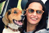 S psem či kočkou na dovolenou? Expertka: Žádný Kinedryl a v autě zavřete okna