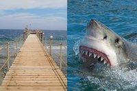 Českého turistu (†42) v Egyptě zabil žralok u mola hotelu. Žena ho viděla umírat