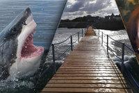 Žralok zabil českého tátu (†42) dvou dětí. Matka se s nimi z Egypta vrátila utajeně