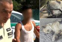 Policie dopadla hyenu, která odhodila pod most svázanou fenku: Jde o mladíka z romské osady