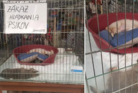 Supermarket prodává štěňata v klecích, další zvířata živoří bez čisté vody