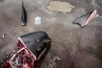 """Japonsko chce obnovit celosvětový lov velryb. """"Katastrofa,"""" zlobí se kritici"""