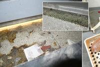 Státní zemědělská a potravinářská inspekce (SZPI) uzavřela v pondělí  obchodní dům řetězce Tesco v Aši na Chebsku. Důvodem jsou nezvládnutá  deratizační ... 3f7d81e4d6b