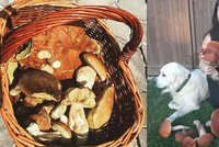 Zapršelo a už rostou: Míša (26) z Táborska našla 2,5kilový křemenáč!