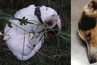 Nechali umírat nemocného pejska, prý protože chtěli ušetřit: Moc trpěl, tvrdí ochránkyně zvířat