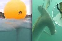 Háky v moři vábí a zabíjí žraloky. Mají chránit turisty