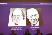 Nobelovu cenu za lékařství má Američan a Japonec. Za speciální léčbu rakoviny
