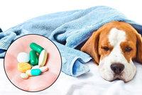 Ivan polykal antibiotika určená pro psa, nechtělo se mu k doktorce. Experti se hrozí