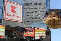 Hon na hada z Kauflandu v Orlové pokračuje: Nikdo neví, kde je, a všichni se ho bojí
