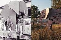Symbol safari musel k zemi. Autor zamáčkl slzu, lidé protestují peticí