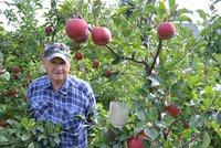 Jablíčka, jaká jinde neutrhnete! Zahrádkáři v Bruntále vypěstovali novou odrůdu Bohemia