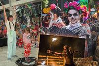 Tipy na víkend: Svátek mrtvých, bublinová i ohňová show a výstava kočičích krásek