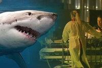 """Turistu (†33) na """"prkně"""" zabil žralok. Záchranář: Útok byl velmi brutální"""