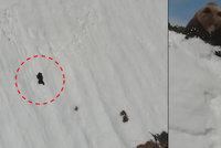 Medvídě zápasilo se zasněženou horou. Máma ho kvůli dronu smetla dolů