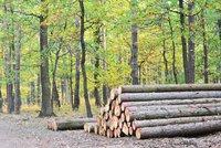 Průřezem k obnově lesíku. Na Krejcárku půjde k zemi přes 100 suchých a nemocných stromů
