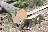 Tragédie na Vyškovsku: Muže při těžbě dřeva zavalil strom, na místě zemřel