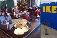 Venku přežívali v bídě. IKEA ubytovala v prodejně opuštěné psy, aby přežili zimu