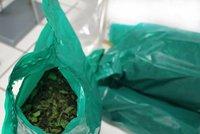 Ruzyňští celníci na letišti zabavili 40 kg rostlinné drogy. Do Čech mířila z Etiopie