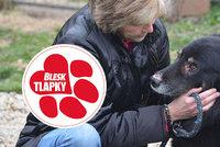 Iva léta pomáhá týraným psům. O jejich osudu, slzách i radosti píše knihu
