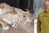 Záchrana týraných lvů z cirkusu hrůzy: Odvezli je do Afriky. Jejich svoboda stála milion