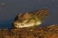 Rybáře (†27) zabil obří krokodýl: Ukousl mu penis!