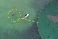 Momenty hrůzy: Žralok kroužil kolem muže na paddleboardu. Odhalil ho dron