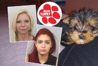 Krutý byznys podvodnic z Prahy: Polomrtvé štěně a tajemství zamčeného pokoje