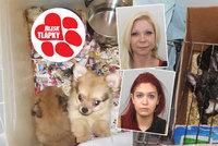 Pražské překupnice nemocných psů v tom nejsou samy: Je to hnusný rodinný kšeft