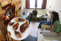 Na kolejích v Petřinách řádí štěnice a švábi, studenti se bojí jezdit domů! Co na to vedení?