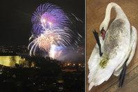 Následky silvestrovských ohňostrojů v Praze: Pět zraněných divokých zvířat