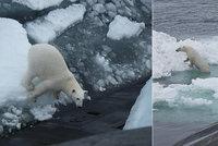 Hladový lední medvěd přepadl jadernou ponorku. Námořníci čekali v úkrytu