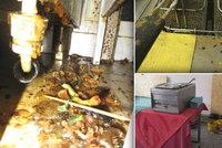 Přepálený olej a fritézy plné špíny: Inspektoři řekli, kde raději nejezte