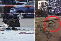 Pes popáleného muže z Václaváku skončil v útulku: Štěkal, když hořel, pak očmuchával místo, kde ležel