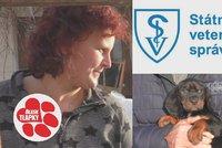 Podezření Blesk tlapek se potvrdilo: Množitelka ve Světnově týrá psy a podvádí s papíry