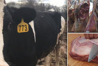 V Polsku odhalili maso z nemocných krav. Češi přitvrdili kontroly dovozu