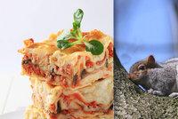 Je libo veverku? Roztomilá zvířátka si našla cestu na talíře: Chutnají prý jako králík
