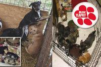 Za zubožené psy v množírnách přísné tresty: Poslanci podpořili boj Blesku