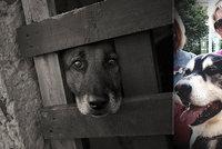 Psi a kočky pláčou: Zemřela zvířecí ochranářka a ikona Zuzana Semelová