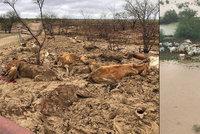 Zoufalí farmáři: Po ohromných vedrech spláchla povodeň dobytek za miliardy korun