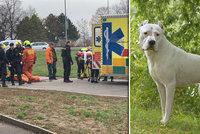 Ženu (91) z Českolipska potrhal agresivní pes: Život jí zachránil Martin s Lenkou, přesto skončila na JIP