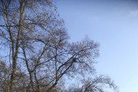 U Rokytky odstraňují nebezpečné větve: Dávejte pozor, kudy chodíte