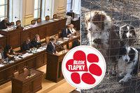 Naděje pro zubožené psy v množírnách. Poslanci kývli v boji proti týrání na novelu zákona