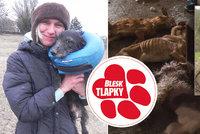 Žena nechala v domě v Ivančicích 16 psů: Požírali se navzájem! Hrozí jí dva roky vězení