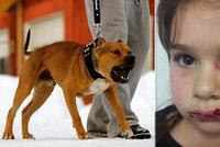 Holčičku na letišti potrhal pitbul: Měl sloužit jako asistenční pes!