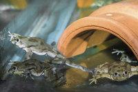 Do pražské zoo dorazily vzácné vodnice: Jejich jihoamerická populace je v ohrožení