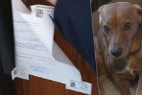 Exekutor zapečetil byt se dvěma psy! Zvířata mohla zemřít kvůli 13 tisícům