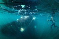 Potápěče spolkla velryba! Tma, bolest a instinkty, popsal děsivé okamžiky