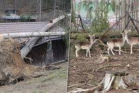 Eberhard z olomoucké zoo vypustil jeleny a daňky. Jejich poloha je po orkánu nejistá