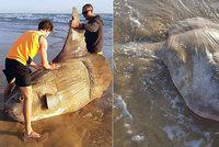 Moře vyplavilo vzácnou obří rybu. Váží jako auto, rybáři si ji spletli s vrakem